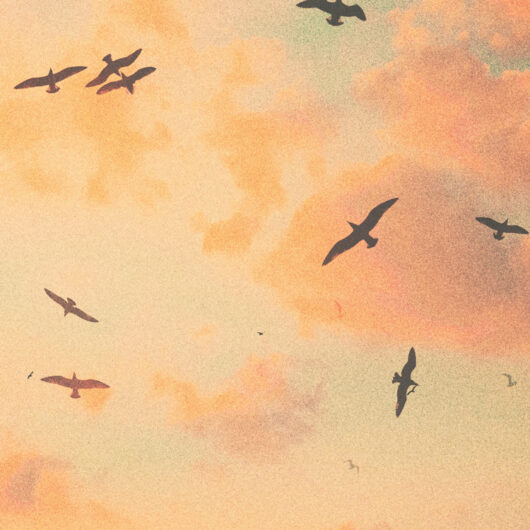 birds flying clouds album cover art designer